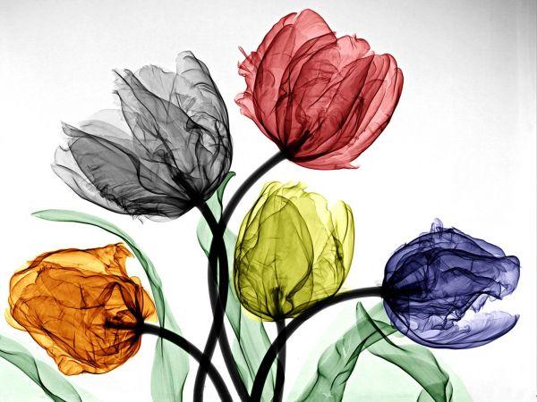 Arie Van't Riet - Parrot tulips