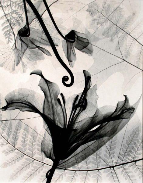 Judith McMillan - Lilium