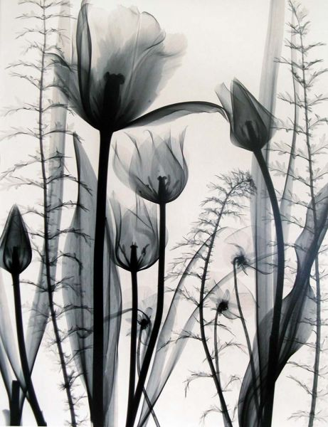 Judith McMillan - Tulip Garden