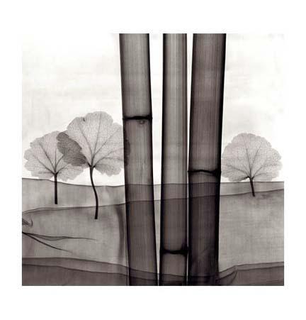 Steven Meyers - Bamboo