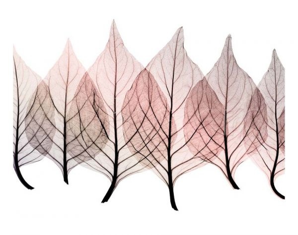 Steven Meyers - Celosia