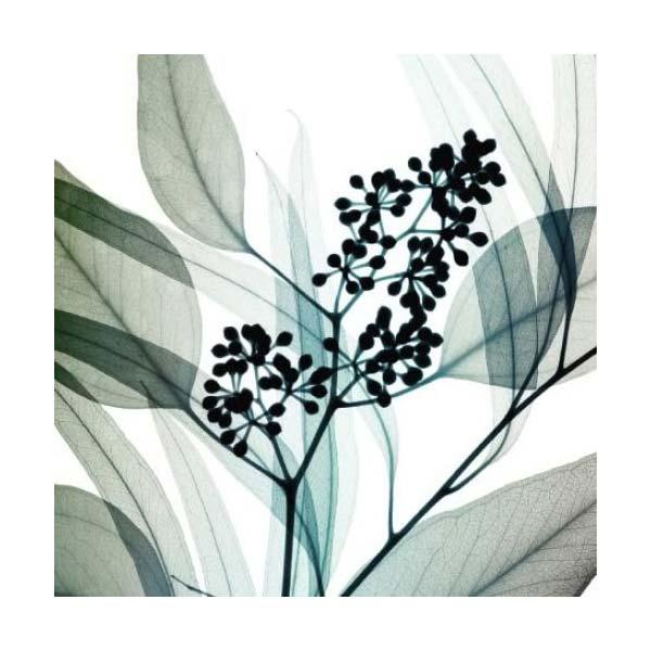 Steven Meyers - Eucalyptus